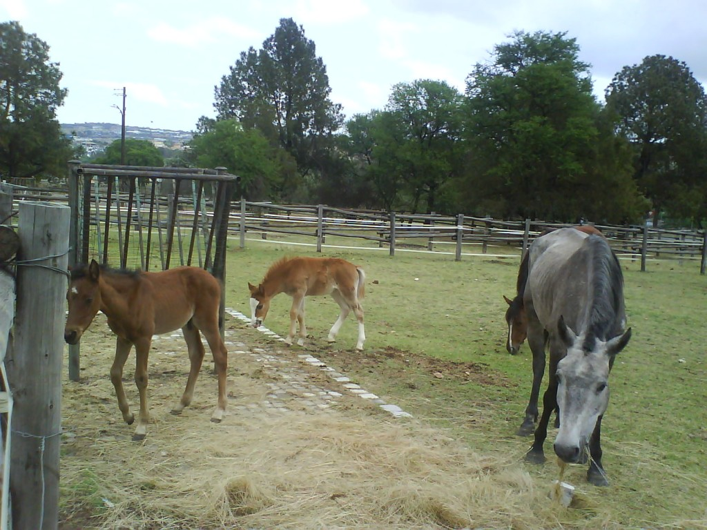 Aaaww, little foals!