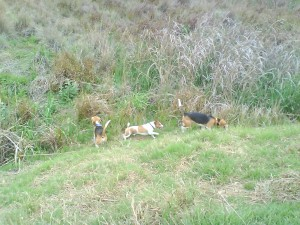 Harry, Coda and Oscar running up and down the bank