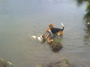 Coda, Harry and Oscar testing the water
